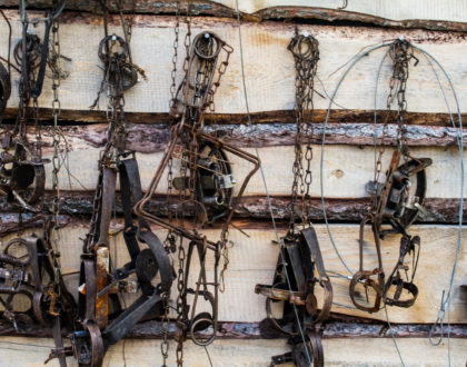 Trapping Gear To Get You Started